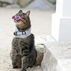 おでかけ猫/颯/トラ猫/キジトラ/猫 カッコつけたにょ😎