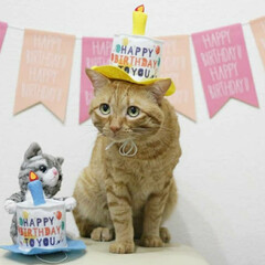 福ちゃん/トラ猫/茶トラ/猫 9月7日は福ちゃんの6歳の お誕生日でし…(2枚目)