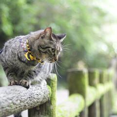 輝/トラ猫/キジトラ/猫/フォロー大歓迎/にゃんこ同好会/... 箕面公園(3枚目)