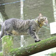 颯/トラ猫/キジトラ/ねこ/猫/フォロー大歓迎/... 自然最高にゃ⤴️(3枚目)