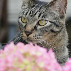 輝/トラ猫/キジトラ/猫 すていほーむ、 暇なのでお花の植え替え💠(3枚目)