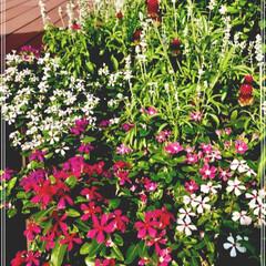 癒し/ビルの屋上花壇/花/令和の一枚/至福のひととき/おでかけ/... 猛暑の中 🌞 東京ど真ん中 屋上庭園 流…