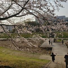 春のフォト投稿キャンペーン/はじめてフォト投稿 この春に見てきた桜を一挙公開🌸  引越し…(3枚目)