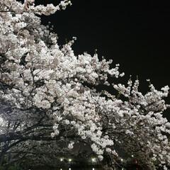 春のフォト投稿キャンペーン/はじめてフォト投稿 この春に見てきた桜を一挙公開🌸  引越し…(4枚目)