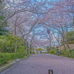 わんこと旅/ミニチュアダックス/写真で伝えたい私の世界/旅が仕事/ノマド/スローライフ/... 桜巡り続行中ですよー‼️ あちこち満開だ…