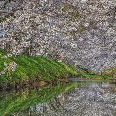 リフレクション/私のお気に入りの場所/スローライフ/旅が仕事/写真で伝えたい私の世界/ノマド/... 満開の桜+満開の桜🌸 川に映り込む桜も綺…