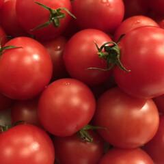 野菜ソムリエ/トマト/野菜/うふふの実 クボタeファームでつくるあまーいトマトで…
