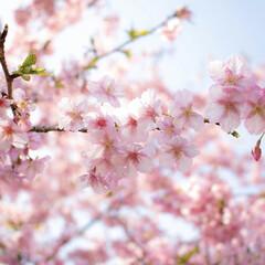 一眼レフ Canon キヤノン EOS Kiss X8i EF-S18-55 IS STM レンズキット 新品SDカード付き(デジタル一眼レフカメラ)を使ったクチコミ「春🌸  ・・・ 何気なく咲いていた1本の…」