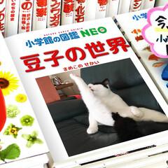 LIMIAペット同好会/にゃんこ同好会 豆子のせくちー写真集❤️(2枚目)