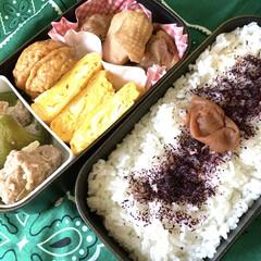三島食品 ゆかり梅入り 22g×10袋入×(ふりかけ)を使ったクチコミ「夫弁当。 晩のおかずの残りを、毎日お弁当…」
