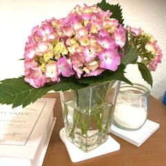 友和 重曹 1kg(重曹、クエン酸)を使ったクチコミ「玄関に庭のアジサイを飾りました。   セ…」