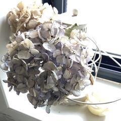 フレグランスキャンドル ピーチローズ 140g | グラーストウキョウ(アロマグッズ)を使ったクチコミ「今年つんだアジサイドライを飾っています。…」(2枚目)