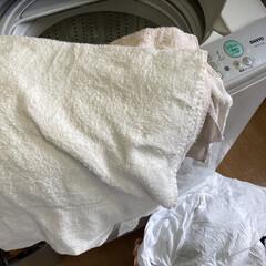 日本製 フェイスタオル ローゼンカラー(美顔器)を使ったクチコミ「汗臭い衣類が多かったので先に水洗いしまし…」