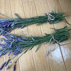 アルミハンガー/麻/ラベンダー/ドライフラワーのある暮らし/簡単/暮らし 庭のラベンダーが咲きました! さっそく収…