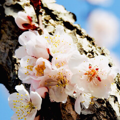 風景/小さい春