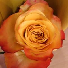 薔薇 今月のアフリカンローズ届きました✨  今…