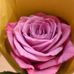 空/薔薇 今月のアフリカンローズ 良い香り💕  今…(1枚目)