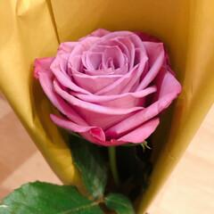 空/薔薇 今月のアフリカンローズ 良い香り💕  今…(2枚目)