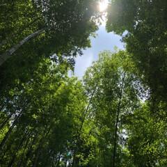風景 自然界の恩恵✨✨✨  琵琶はもぎたてフレ…(1枚目)
