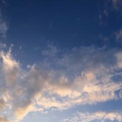 太陽/空/桜/薔薇 元気の源達(3枚目)