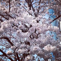 太陽/空/桜/薔薇 元気の源達(2枚目)