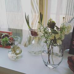 interior/インテリア/出窓インテリア/出窓/日々の暮らし/日々/... リビングにある出窓には よく植物を並べま…