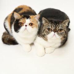 ぶさかわ猫/令和の一枚/にゃんこ同好会/うちの子ベストショット 4ヶ月違いの姉弟の殿・姫です