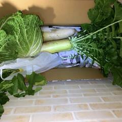 大根の葉/大根 畑をしている知人から 大根と白菜を頂きま…