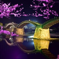 桜/春/岩国/LIMIAおでかけ部/おでかけ/風景/... カメラの練習に錦帯橋
