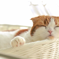 寝顔天使/かご猫/あごのせ/寝顔/おやすみショット/LIMIAペット同好会/... 出窓でお昼寝が大好きデスにゃ