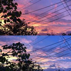 夕暮れ/夕焼け/雲/空 昨日の空(*´▽`*)ノ)) 数分で染ま…