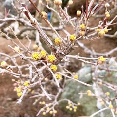 はじめてフォト投稿/小さい春 庭に小さな春を見つけました❁