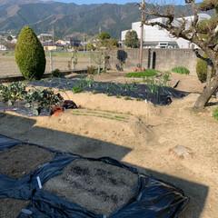 春の一枚 おはようございます🌞 我が家の家庭菜園 …