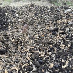 小さい春 わかりにくいけど真ん中にアスパラ 植える…