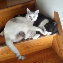猫派 2匹で仲良く通行妨害中(;゚д゚)  ク…