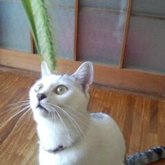 猫派 おもちゃの猫じゃらしより本物猫じゃらしに…