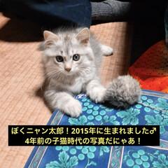 猫屋敷/LIMIAペット同好会/フォロー大歓迎/はじめてフォト投稿/ペット仲間募集/猫/...