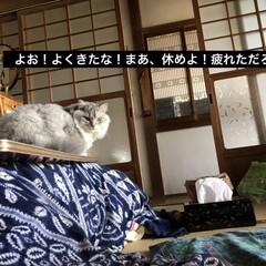 イケメン/フォロー大歓迎/ペット/ペット仲間募集/猫/にゃんこ同好会 (1枚目)