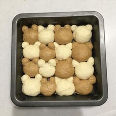 手ごねパン/パン作り/くまパン/ちぎりパン/パン/フォロー大歓迎/... ちぎりパン、くまパン🐻 焼く前です♫可愛…
