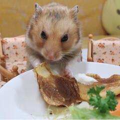 ハムスター/ハムスター大好き/ハムスター同好会 ちゃんと座ってご飯食べたよ🐹