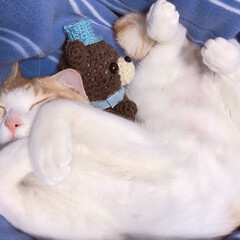 おやすみショット くまちゃんと一緒に、おやすみにゃさい…