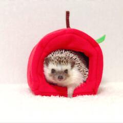 HOUSE/ハウス/🆕🌄/りんごちゃん/りんご/hedgehoglife/... りんごHOUSEだよー🍎🍏 ひょっこり出…