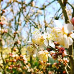 小さな幸せ/ウォーキング/散歩/日常のふとしたこと/小さな春/カメラ女子/... たくさんの小さな春🍃🌸🐝🌸🍃