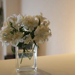 春のフォト投稿キャンペーン/ありがとう平成/令和カウントダウン/暮らし/住まい/おうち自慢 雨でもお花で癒される💐(1枚目)
