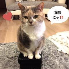 スコティッシュフォールド/ペット仲間募集/猫/ねこ/猫派/LIMIAペット同好会/... おはよう☀ お気に入りのティッシュケース…