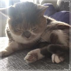 ねこ/猫/ニャンコ同好会/猫好き大歓迎/ペット仲間募集/LIMIAペット同好会/... お久しぶりにゃ。10月は体調崩してたにゃ…