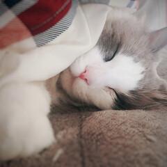おやすみショット しーぃ