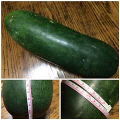 野菜/メニュー悩み中 ちょっと⁈ 季節外れ⁈ かなぁ… 巨大な…