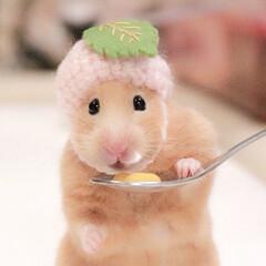 桜餅/帽子/癒し/小動物/動物/可愛い/... 桜餅モナちゃん🐹🌸