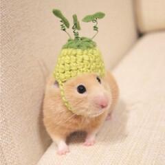 ハムスター同好会/帽子/手作り/癒し/ハムスター/可愛い/... もうすぐ春🐹🌸 芽吹き始めました🐹🌱